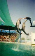 В дельфинарии Адлер